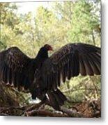 Vulture 429 Metal Print