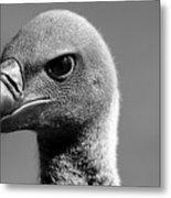 Vulture Eyes Metal Print