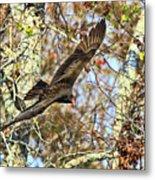 Vulture Glide Metal Print