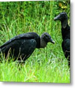 Vulture Pair Metal Print