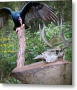 vulture with Skull Metal Print