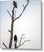 Vultures Perched In A Dead Tree Metal Print