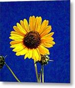 Wabi-sabi Sunflower Metal Print