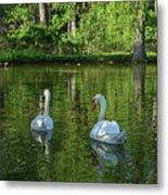 Wagner Vinyard Estate Swans Finger Lakes Lodi Ny Metal Print