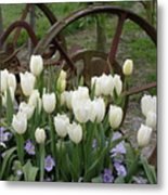 Wagon Wheel Tulips Metal Print