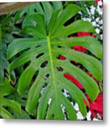 Waikiki Split Leaf Metal Print