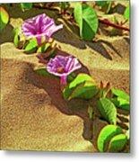 Wailea Beach Morning Glory With Honeybee Metal Print