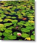 Wailea Water Lilies Metal Print