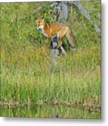 Waiting By The Water Metal Print