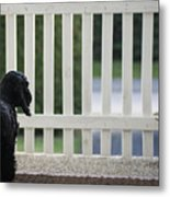 Waiting Metal Print by Camilla Brattemark