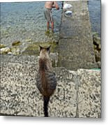 Waiting For A Meal Metal Print