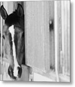 Waiting For A Ride Black And White Metal Print