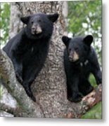 Waiting For Mom Metal Print by Gerry Sibell