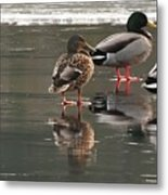 Waiting For The Thaw Metal Print
