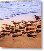 Waiting For The Wave Metal Print