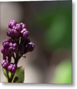 Waiting To Blossom Metal Print