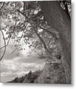 Walden Pond Metal Print