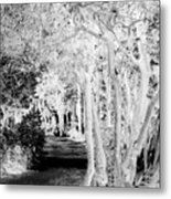 Walk In The Dark Metal Print