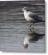 Walking On Water 4850 Metal Print