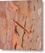 Walking Stick And Pheasant Feather Metal Print