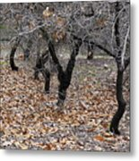 Walking Trees. Metal Print