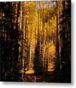 Walking With Aspens Metal Print