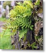 Wall With Fern Metal Print