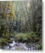 Wallace River Metal Print