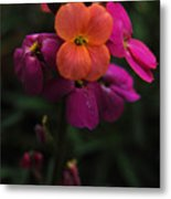 Wallflower Beauties Metal Print