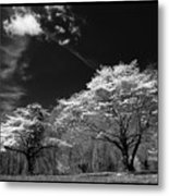 Walnut Creek Dogwoods Metal Print