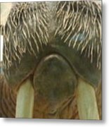 Walrus Whiskers Metal Print