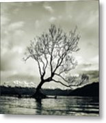 Wanaka Tree - New Zealand  Metal Print