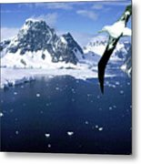 Wandering Albatross Over The Le Maire Channel Metal Print