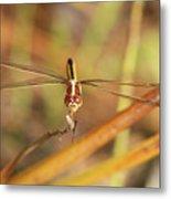 Wandering Glider Dragonfly Metal Print