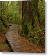Wandering Through The Rainforest Metal Print