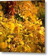 Warm Fall Colors Metal Print