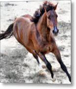 Warmblood Horse Galloping Metal Print by Vanessa Mylett