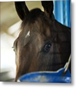Wary Racehorse Metal Print