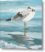 Wary Seagull 2 Metal Print