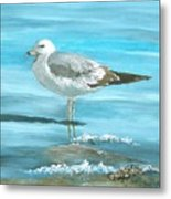 Wary Seagull Metal Print