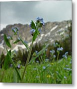 Wasatch Luster Metal Print