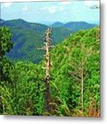 Washington National Forest,wv Metal Print