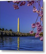 Washington Reflection And Blossoms Metal Print