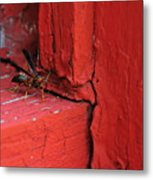 Wasp And Red Metal Print
