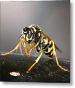 Wasp At Work Metal Print