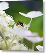 Wasp At Work Metal Print