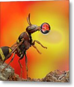 Wasp Blowing Bubble 160605d Metal Print