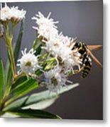 Wasp Closeup Metal Print