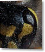 Wasp Eye Metal Print