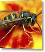 Wasp In The Bloom Metal Print